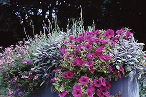 RAL Guetekriterien für Blumenerde