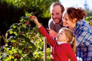 Verbraucherschutz für RAL gütegesicherte Substrate für Pflanzen