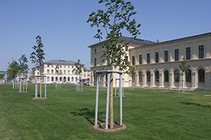 Gütegesichertes Baumsubstrate