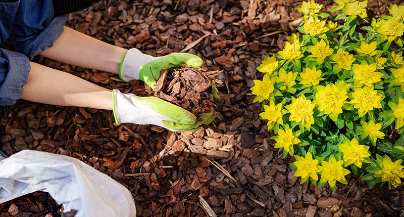 Rindenmulch - RAL Gütezeichen Substrate für Pflanzen