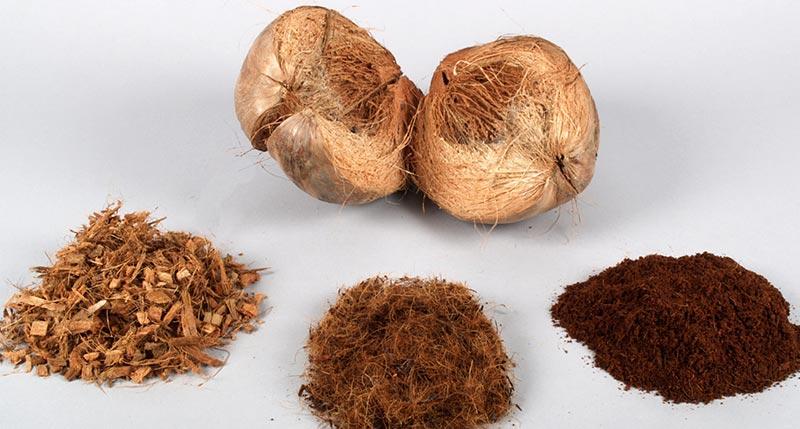 cocos-ggs