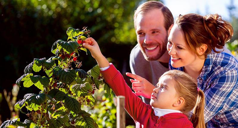 RAL Gütezeichen Substrate für Pflanzen fördert das Vertrauen der Verbraucher