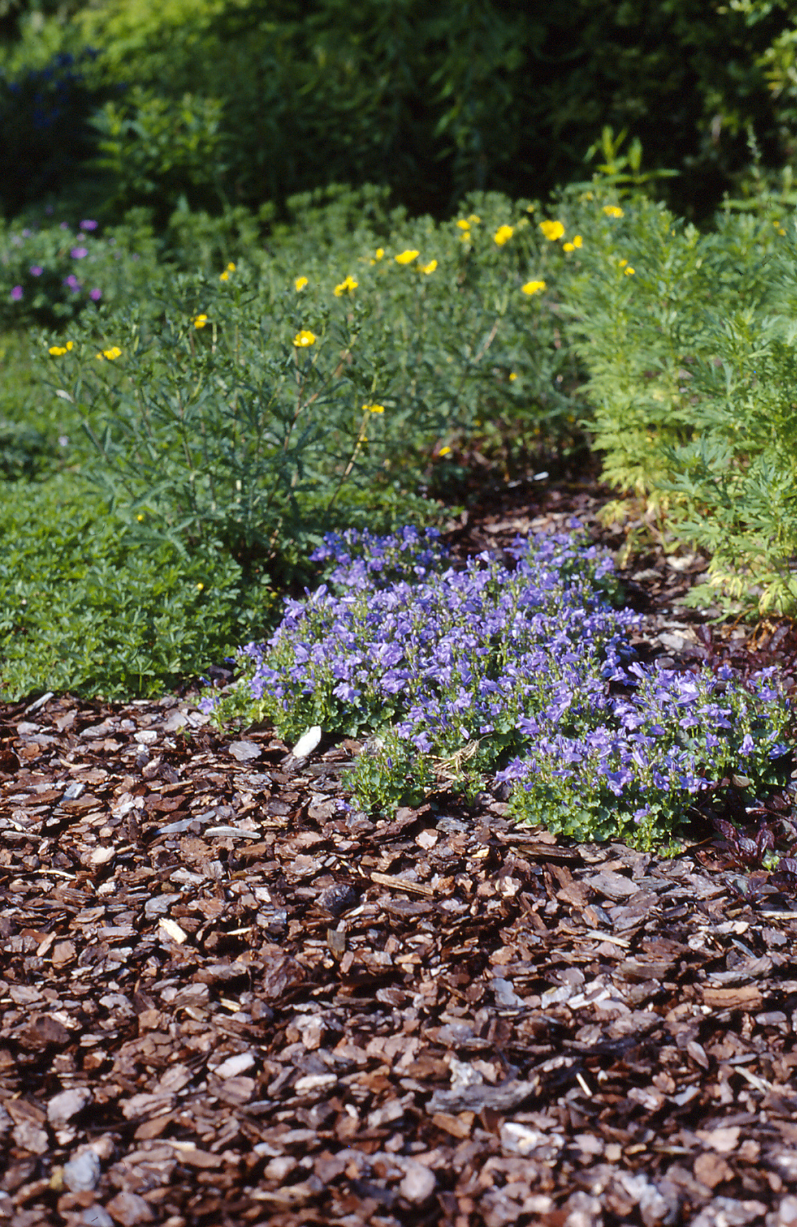 Mulch und Stauden - RAL-Gütesicherung